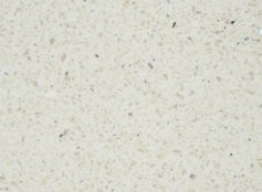 Bushboard Nuance Vanilla Quartz 160mm Finishing Panel